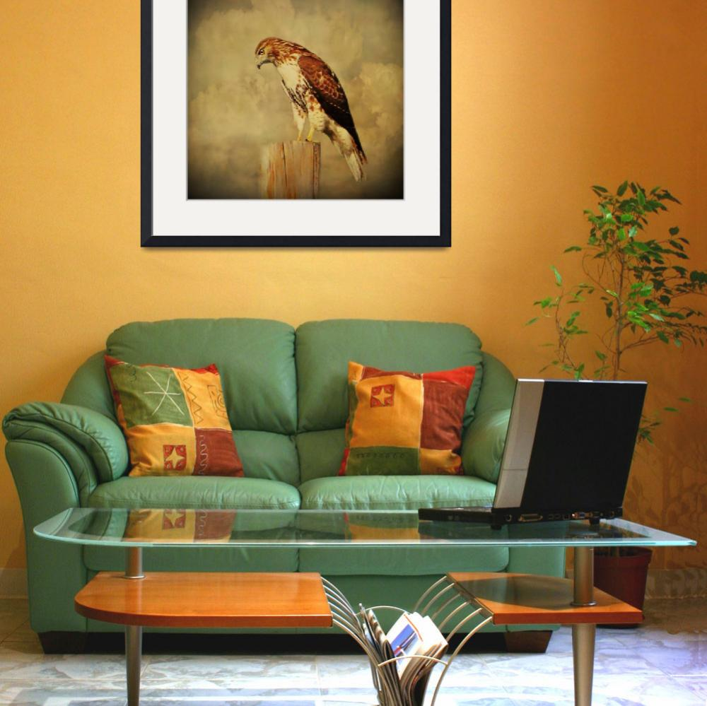 """""""Red Tail Hawk&quot  (2014) by swaby"""