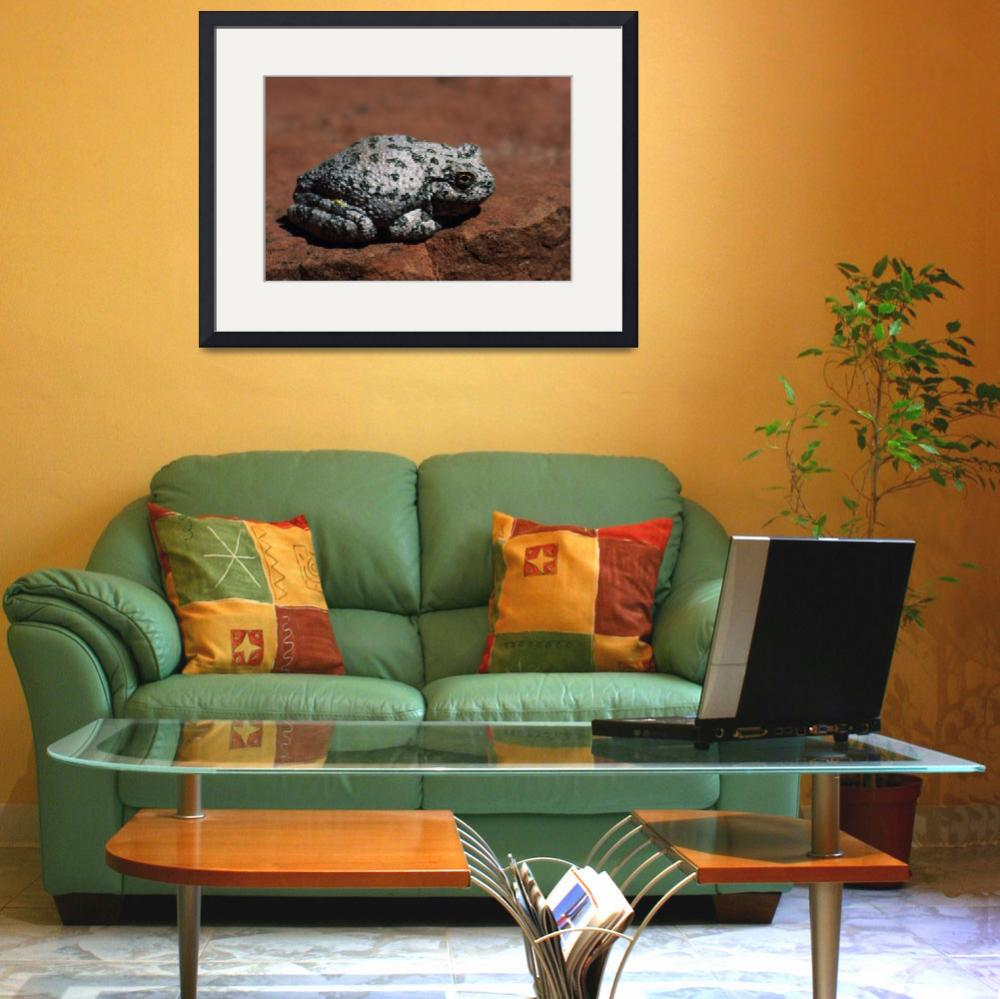 """""""Southwestern Toad (Bufo Microscaphus) On Rock&quot  by Panoramic_Images"""