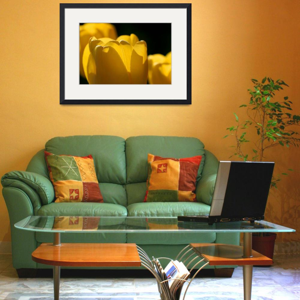 """""""Yellow Tulips with Black Background""""  (2016) by KsWorldArt"""