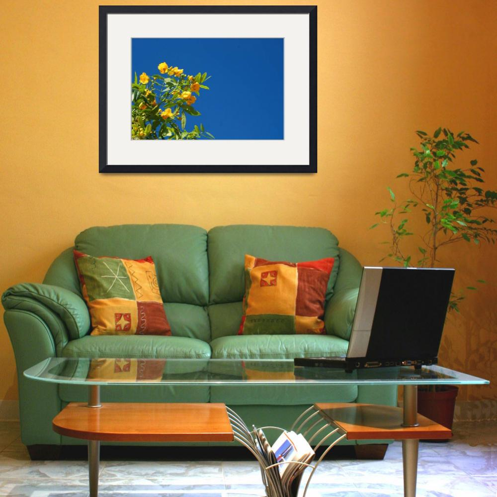 """""""Yellow Flowers&quot  (2013) by rhamm"""