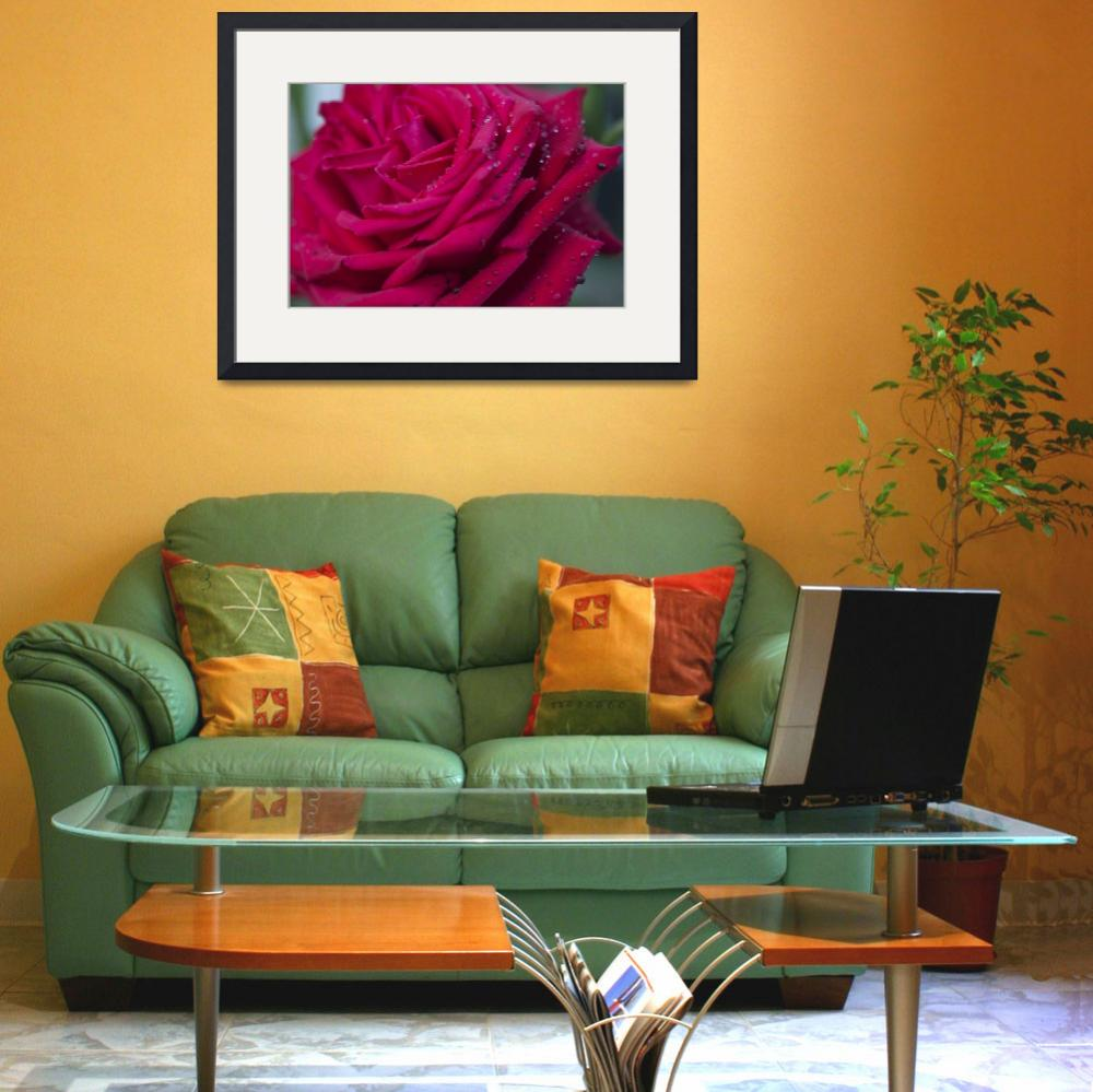 """""""Pink Rose&quot  by StevePurnell"""