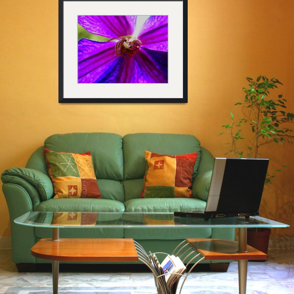 """""""Bright Clematis""""  (2009) by Kimmary"""
