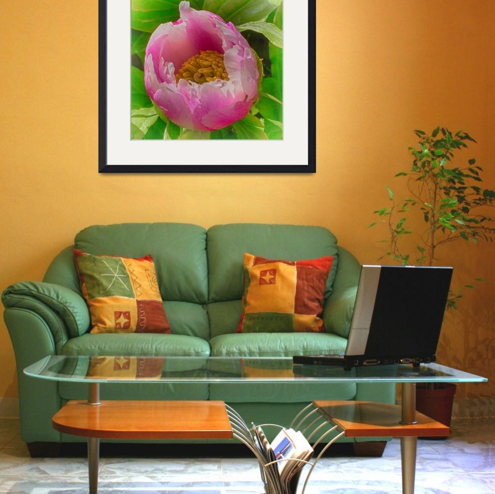 """""""Enchanted Peony&quot  (2015) by SoulfulPhotos"""