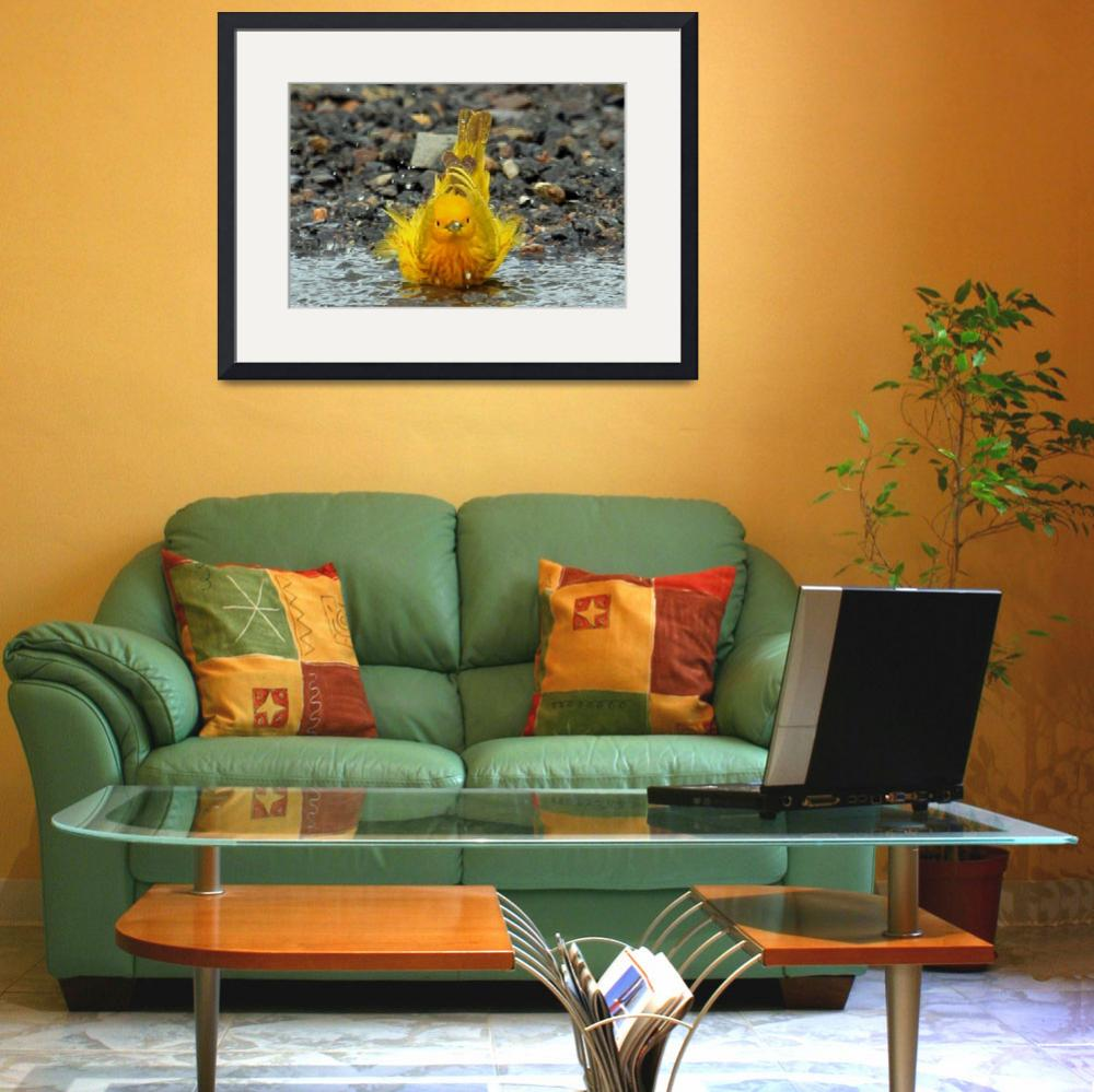 """Yellow Warbler Bathing&quot  (2011) by shelshots"