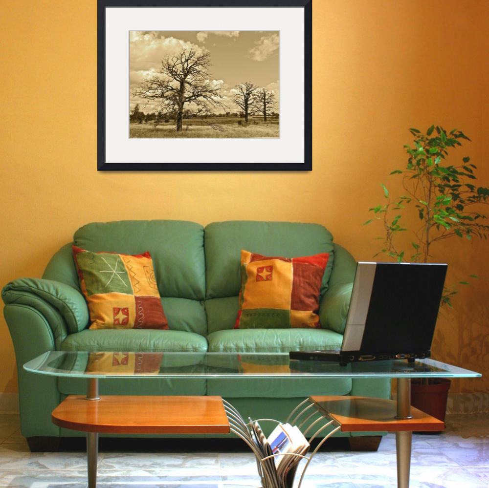 """""""My Three Tree - Sepia&quot  (2012) by mommysam"""