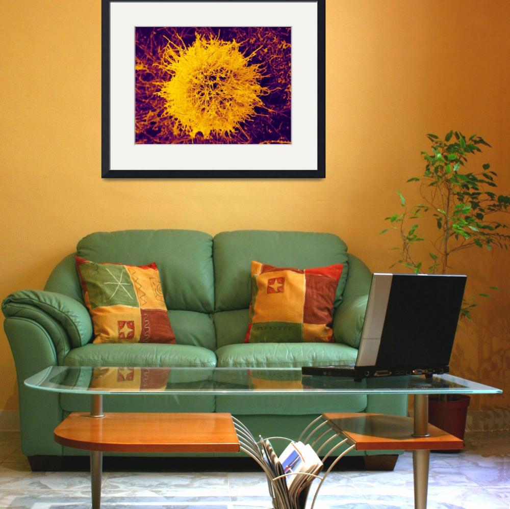 """""""Magnetic Sunburst by Christopher Serran&quot  by ScienceinSociety"""