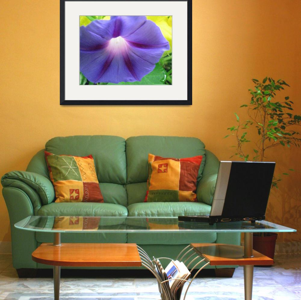 """Purple Morning Glory&quot  (2008) by willis-prints"