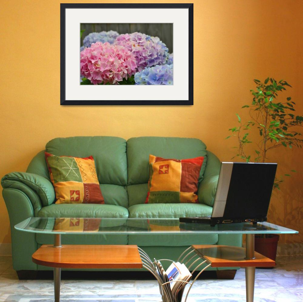 """""""Pink Hydrangeas in the Back Yard&quot  (2012) by MzEmCab"""