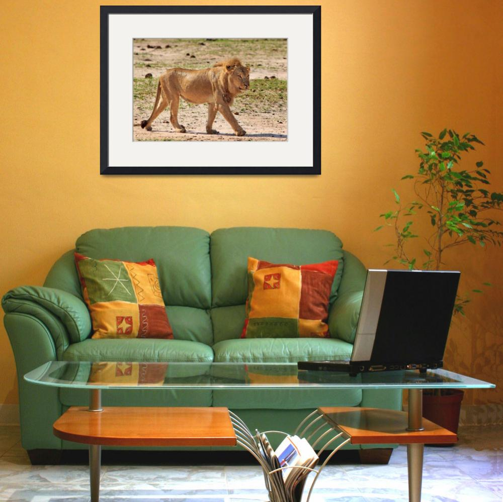 """Africa Animal Framed Photo&quot  by eddiealfaro"