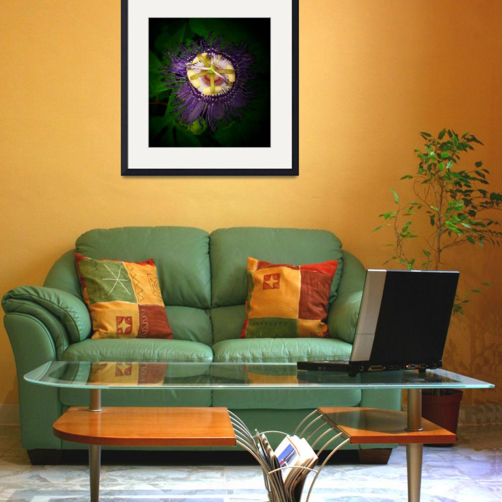 """""""Passion Flower 1_filtered""""  by ChrisCrowley"""