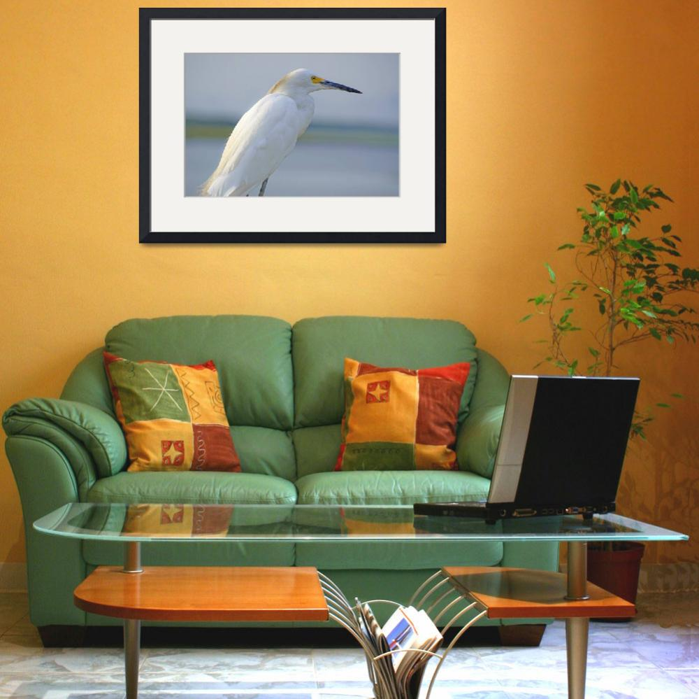 """Snowy Egret Adult&quot  (2009) by albink"