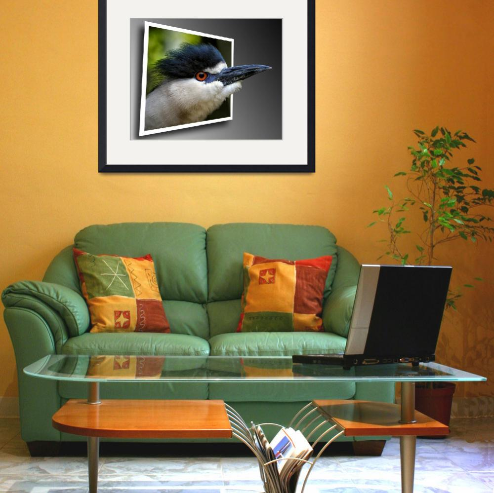 """""""Black Crowned Night Heron Out Of Bounds&quot  by travel"""