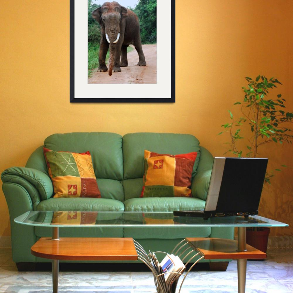 """""""Angry Tusker in fading light""""  by Rivertay"""