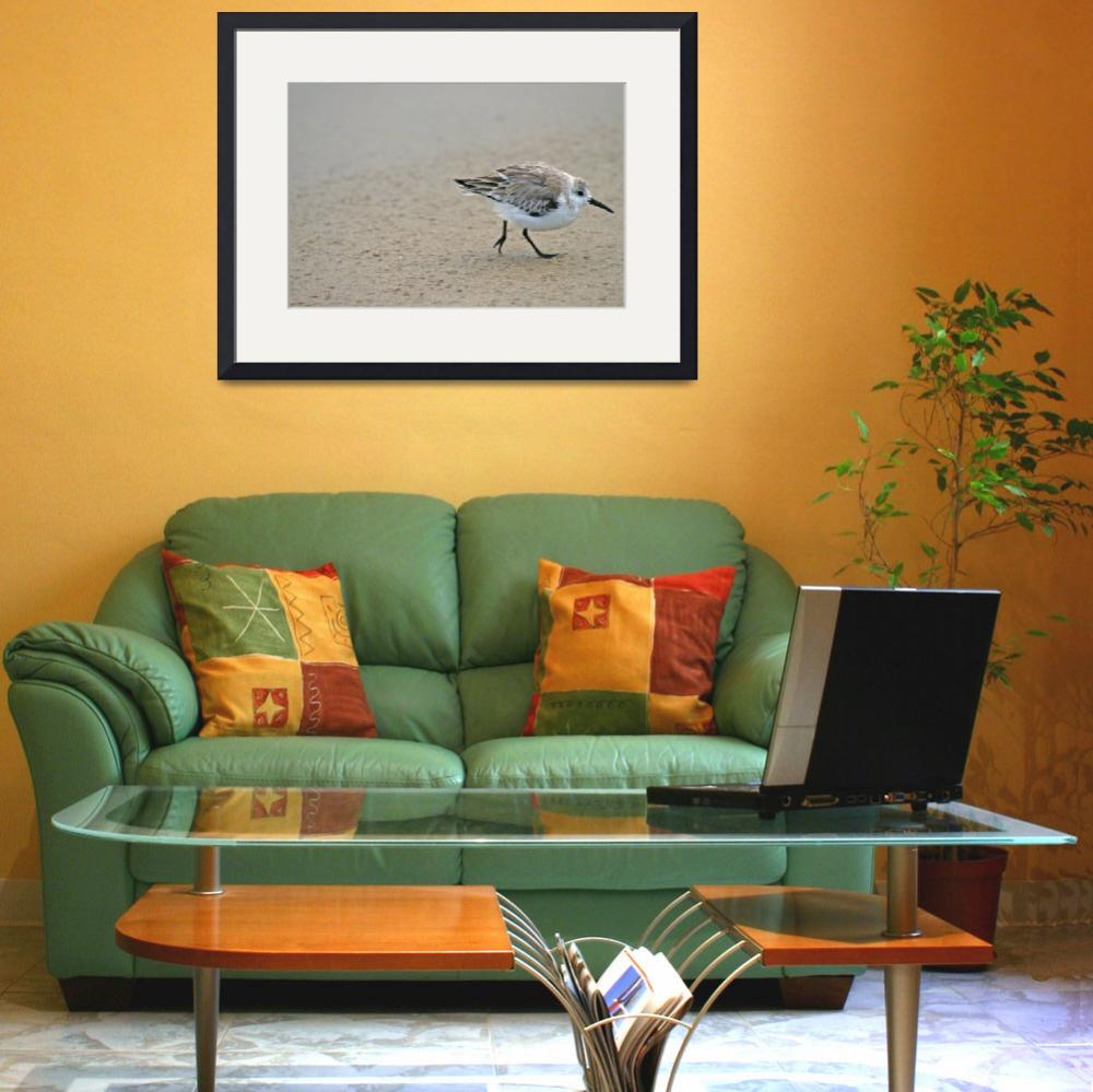 """""""Sandpiper&quot  by beau"""