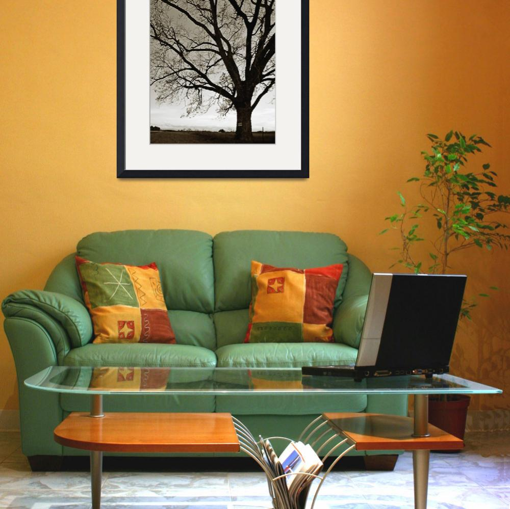 """""""Bare Tree 3&quot  (2011) by SkipNall"""