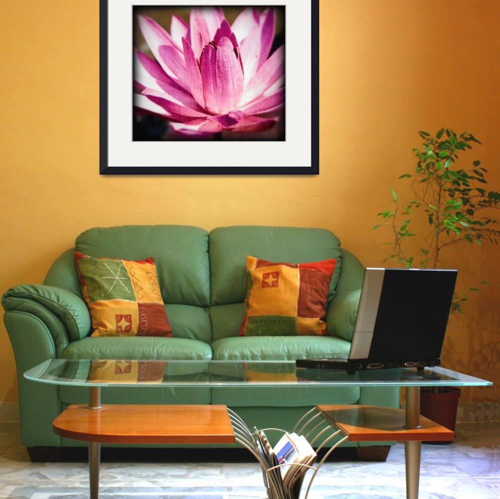 """""""Bright Pink Water Lily&quot  (2009) by johncorney"""