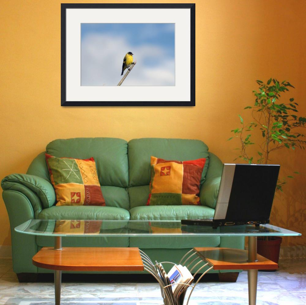 """""""Hooded Siskin on a Branch&quot  (2012) by rhamm"""