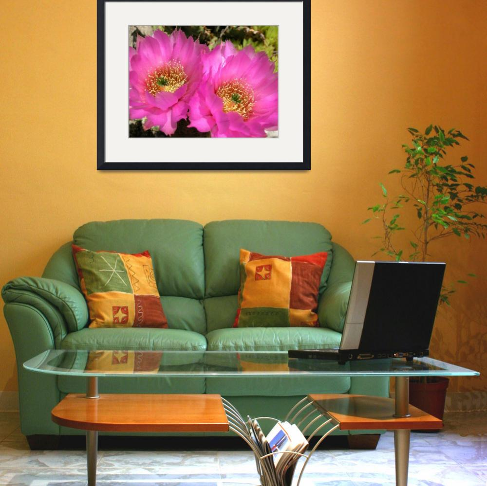 """""""Mauve hedgehog cactus flowers&quot  (2004) by robhuntley"""