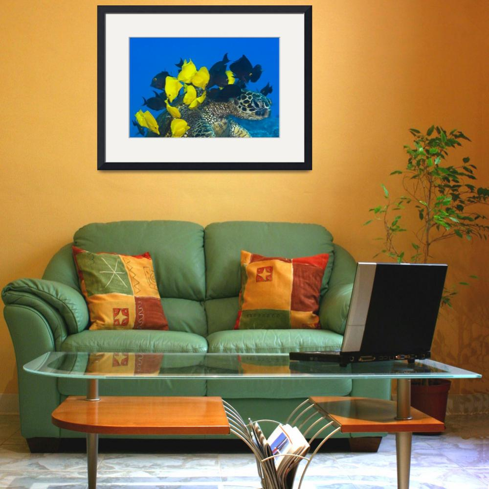 """""""Goldring Surgeonfish And Yellow Tangs Cleaning Alg&quot  by DesignPics"""