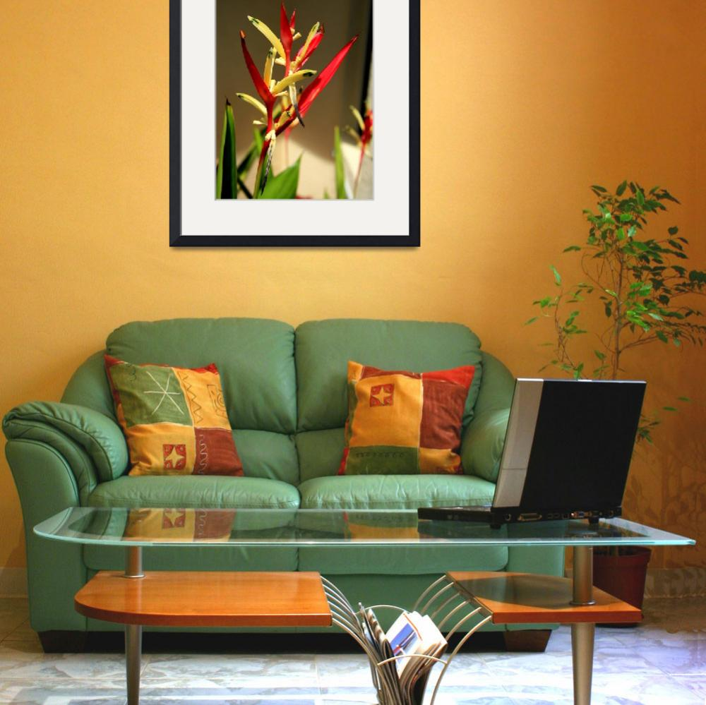 """Heliconia&quot  (2009) by rayjacque"