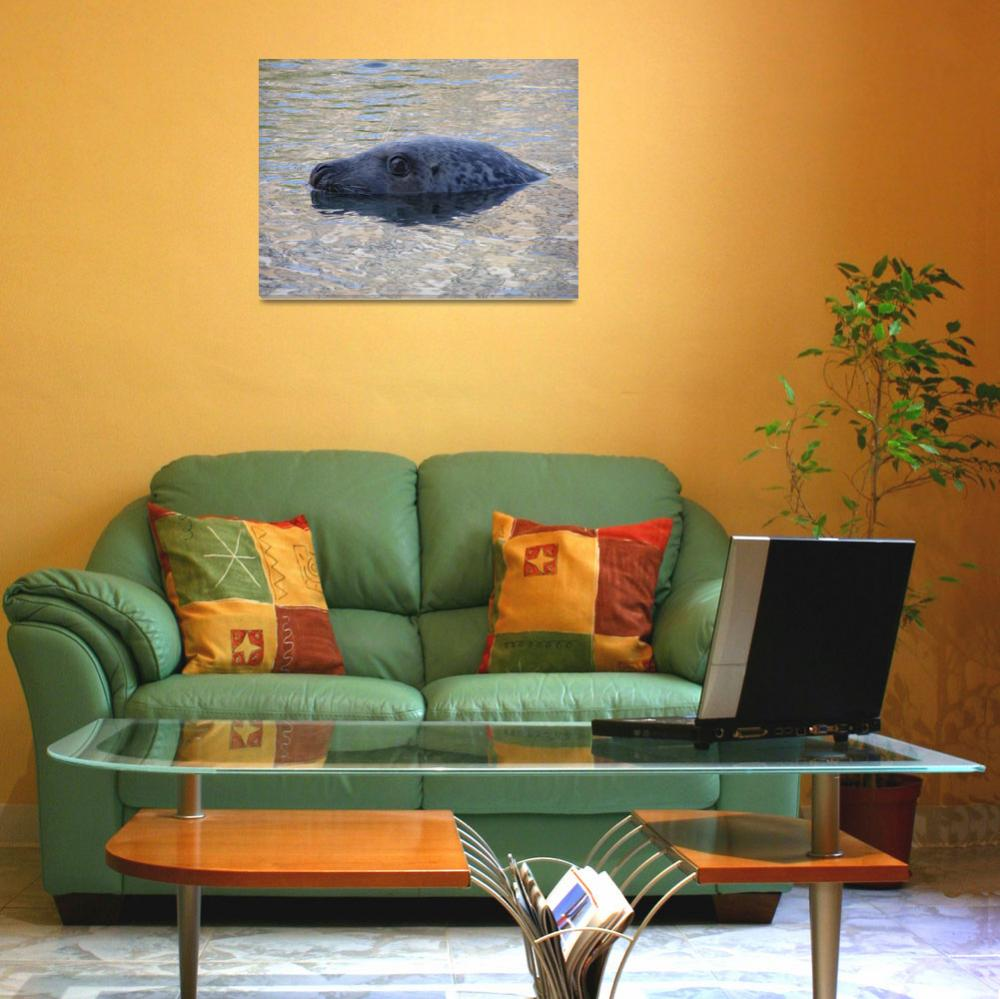 """""""seal and reflection&quot  (2009) by pietrastone"""
