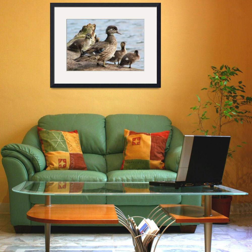 """Family of Ducks&quot  (2014) by mpaskvan"