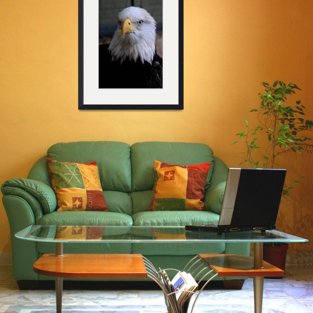 """""""American Bald Eagle&quot  (2010) by AwesomePhotography"""