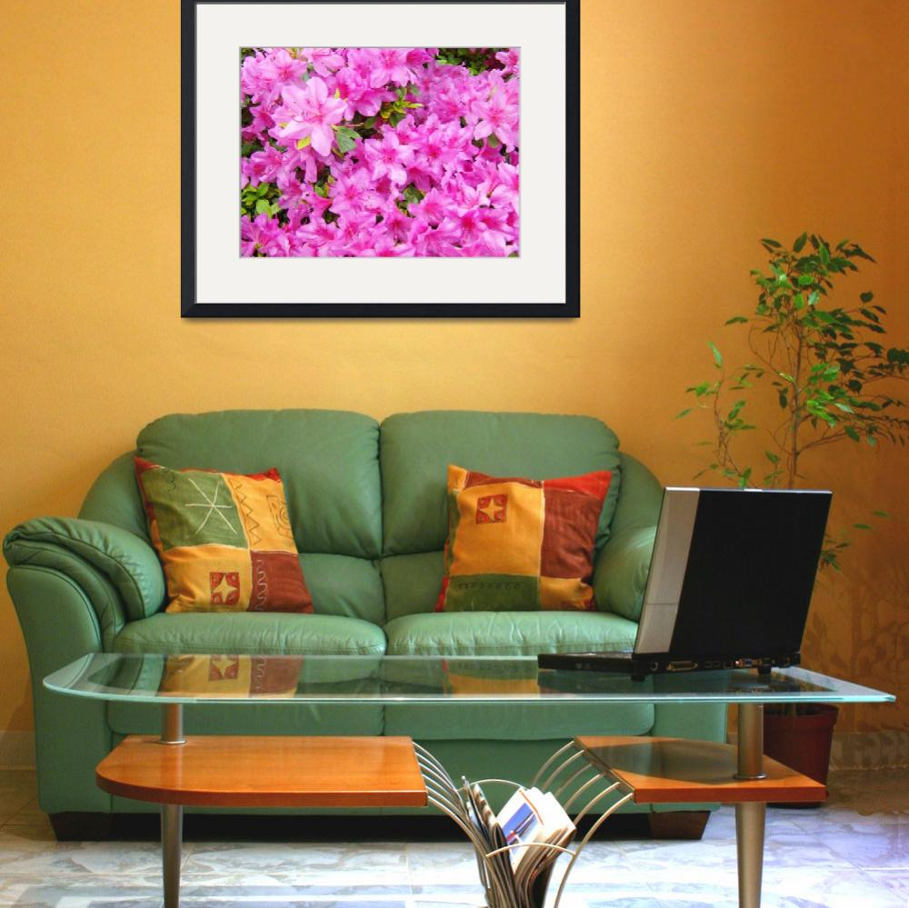 """Azaleas Landscaped Art Prints Pink Azalea Flowers""  (2009) by BasleeTroutman"