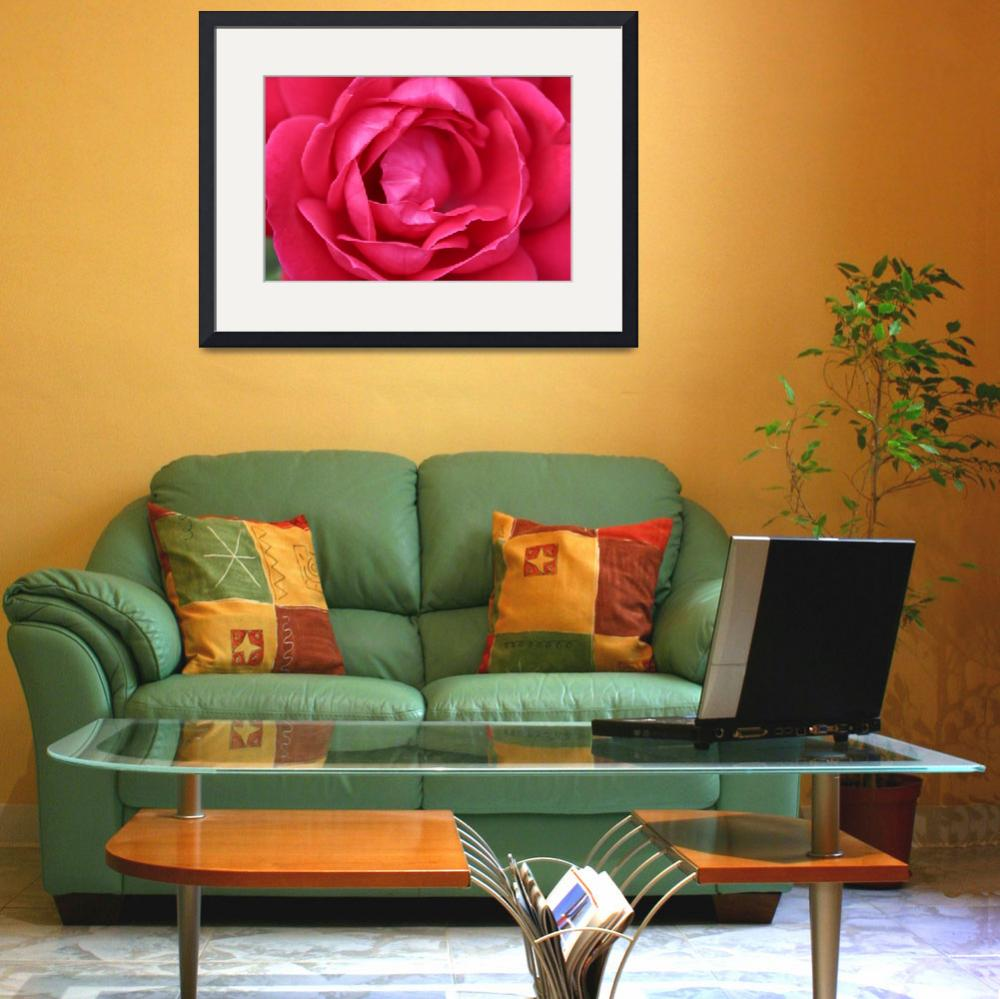 """""""Rose""""  (2013) by citrons"""
