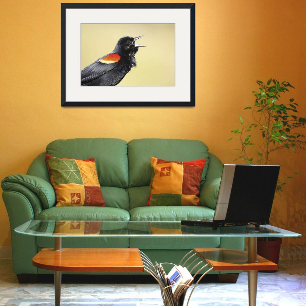 """""""Red-Winged Blackbird Photograph&quot  by ArtLoversOnline"""