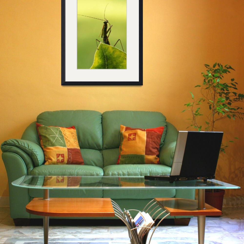 """""""Praying mantis perched on leaf tip""""  by Panoramic_Images"""