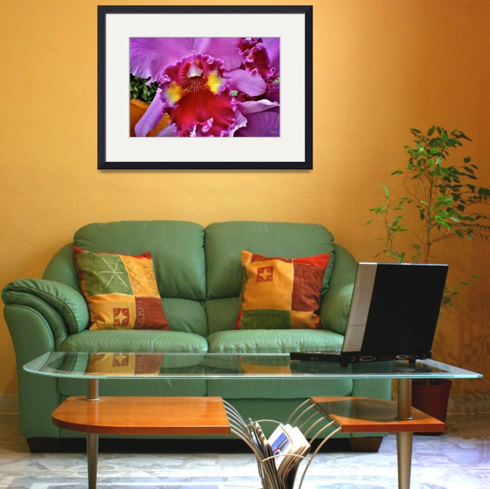 """""""Orchid Beauty&quot  (2006) by DigiPix"""