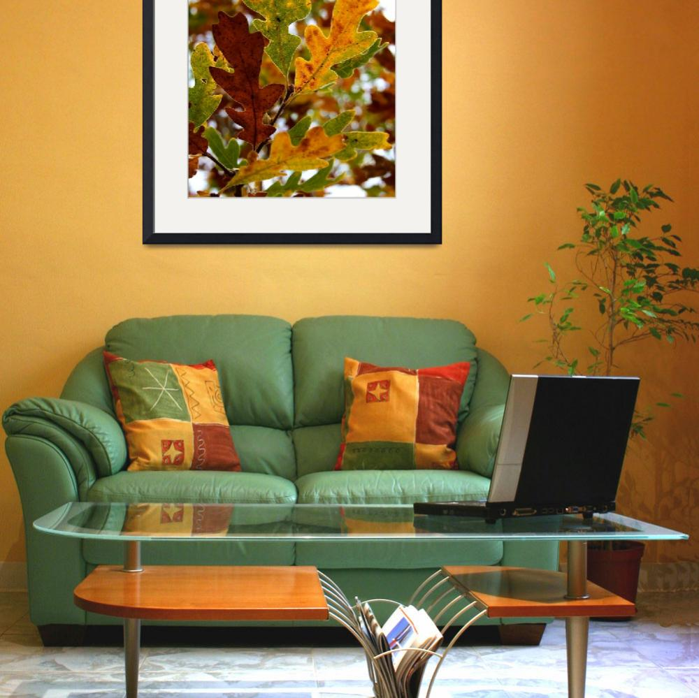 """""""Beauty of the Autumn Oak&quot  (2008) by rayjacque"""