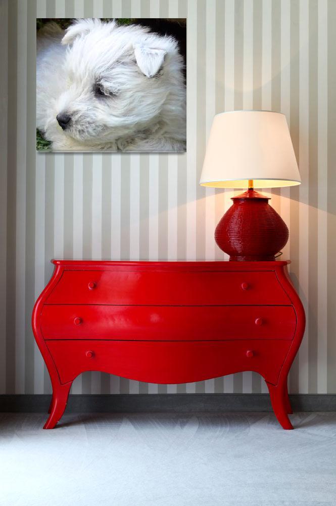 """West Highland White Terrier Puppy&quot  (2008) by Westie"