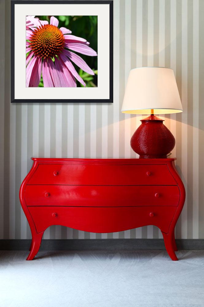 """""""Purple Coneflower in Summer&quot  (2011) by PatriciaSanders"""