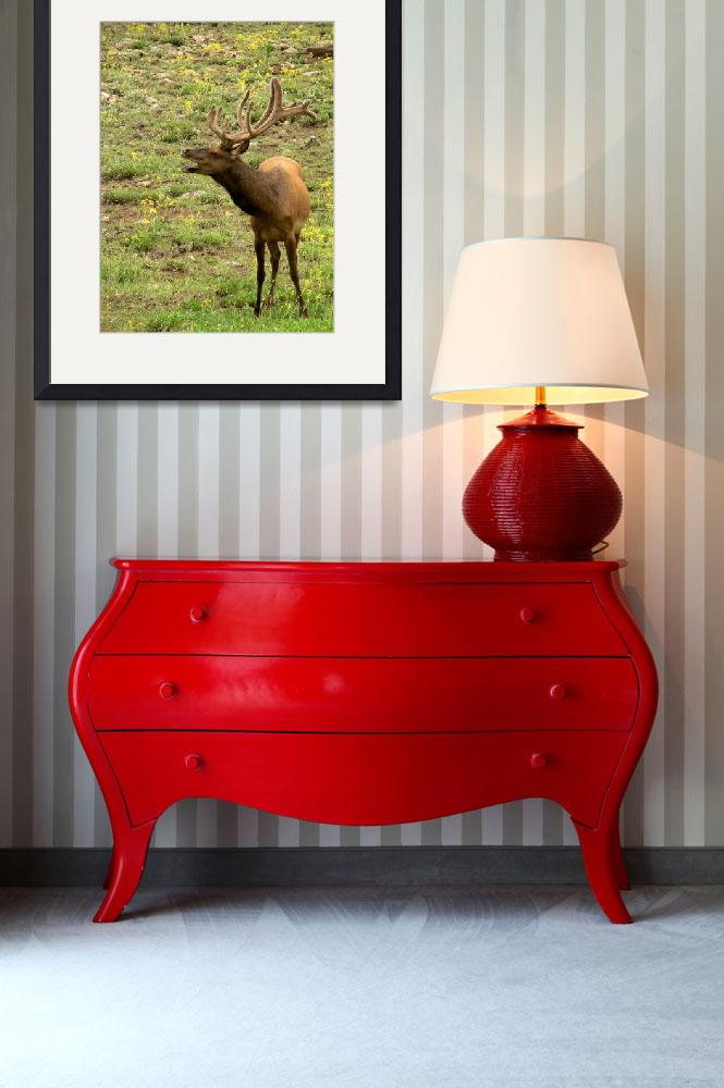 """""""Talking Elk  P1100258&quot  (2010) by rayjacque"""