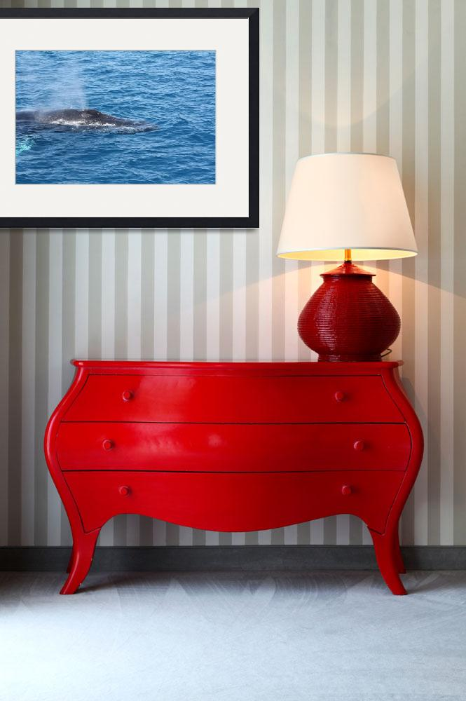 """""""NaP_ Whale Watching056&quot  by nevilleprosser"""