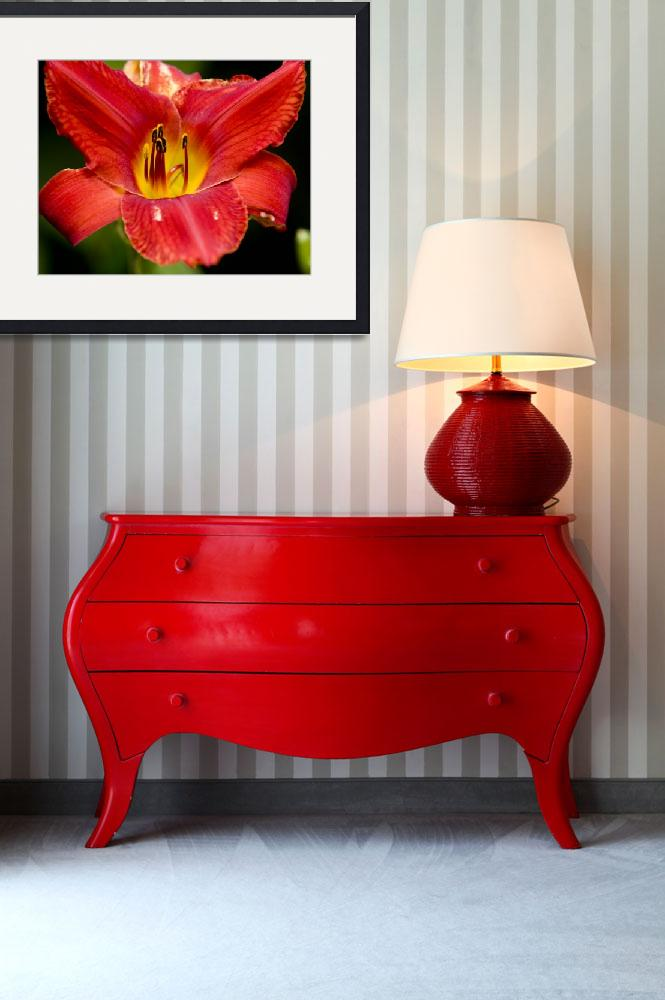 """""""Red Lily""""  (2010) by markwuttke"""