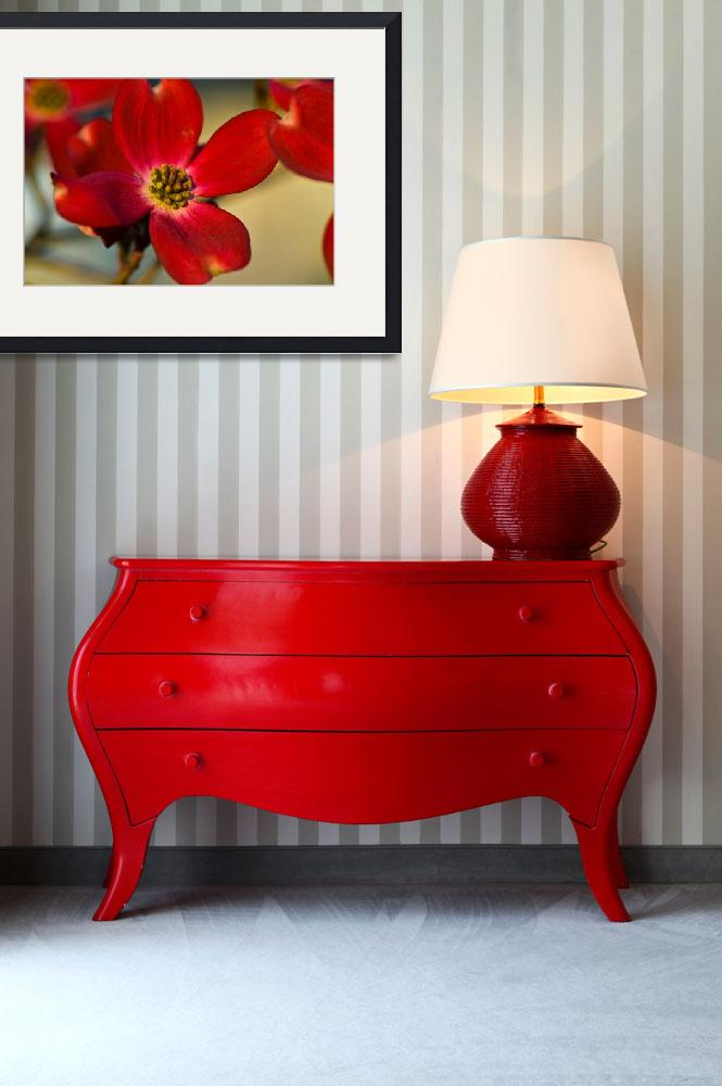 """""""Scarlet Red Dogwood&quot  (2008) by tricia"""
