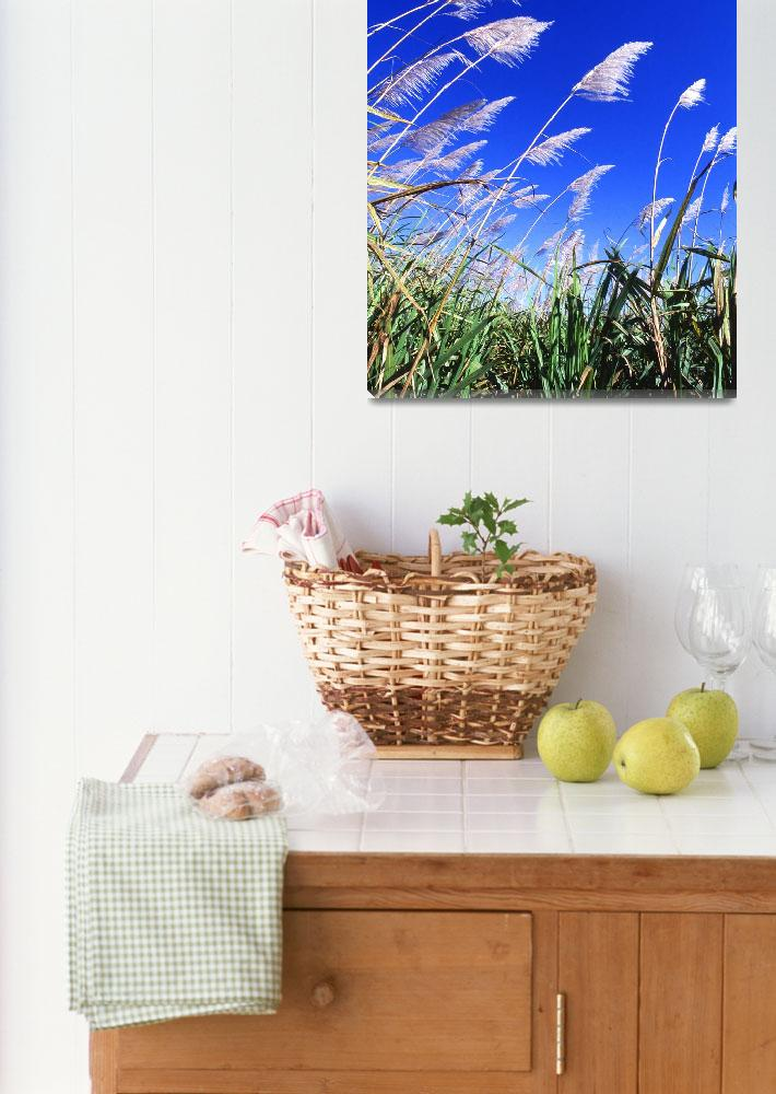 """""""Sugarcane Fields&quot  by Alleycatshirts"""
