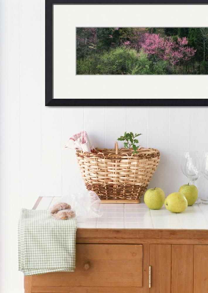 """""""Dogwoods Redbuds KY&quot  by Panoramic_Images"""