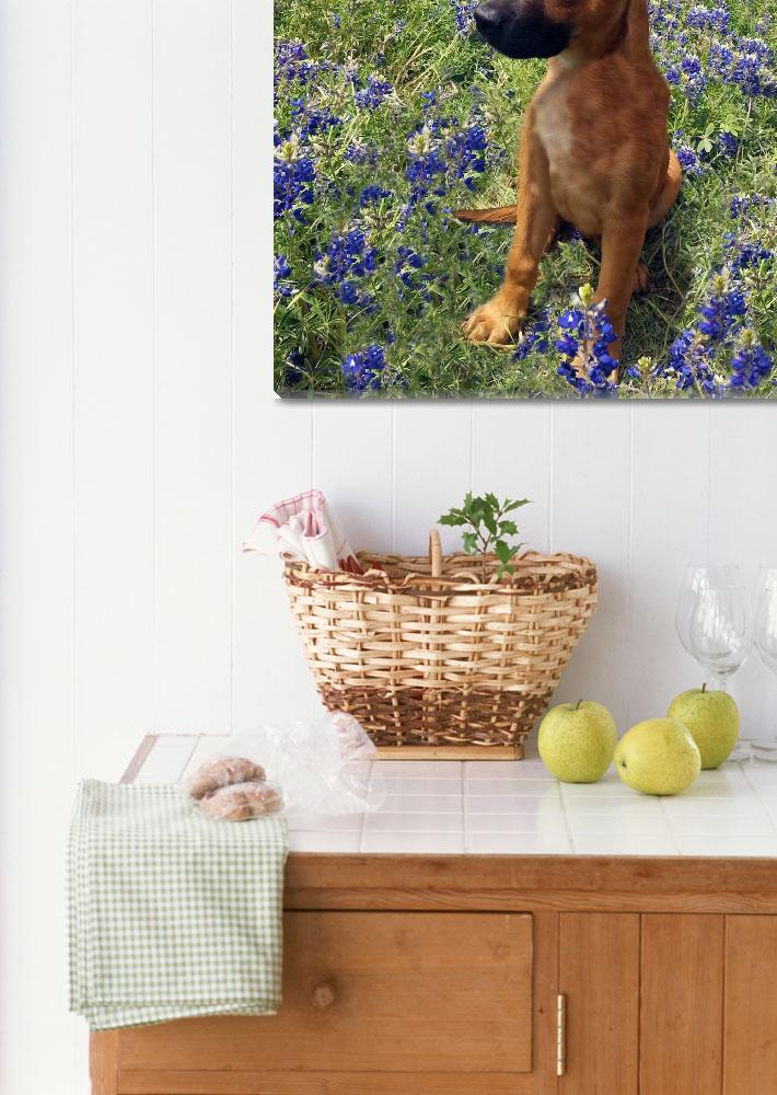 """""""Expressive Puppy and Bluebonnets Photo A19316""""  (2016) by MasArtStudio"""