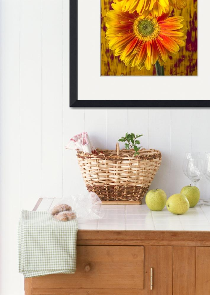 """""""Yellow mums together&quot  (2012) by photogarry"""