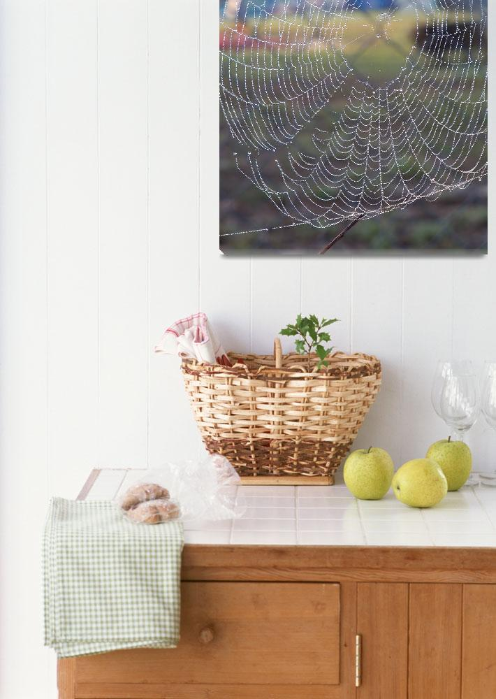 """""""Spider web lined with dew&quot  (2018) by NormaStampSunnyDaze"""