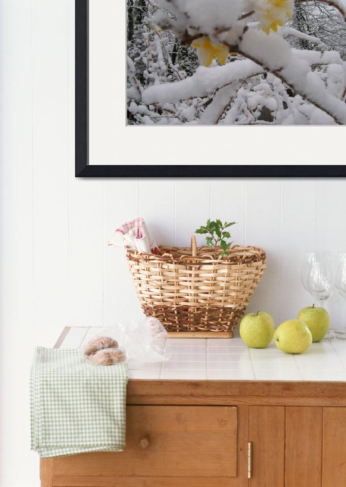 """""""Snow Covered Forsythia&quot  (2009) by lorrainemitchell"""
