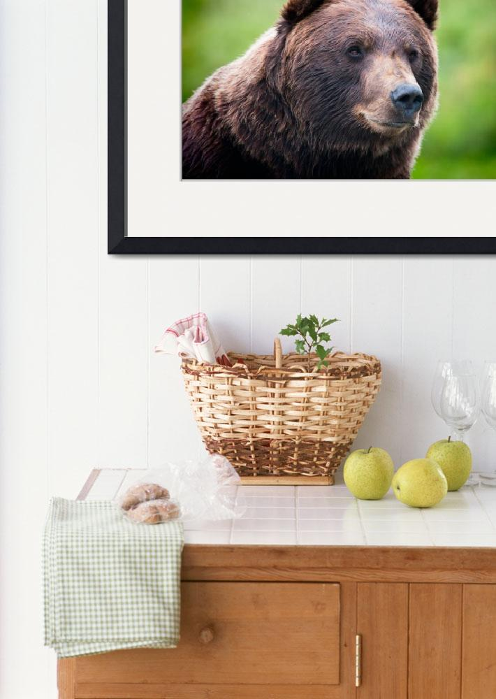 """""""Bear Portrait Session #5&quot  by NewTake"""