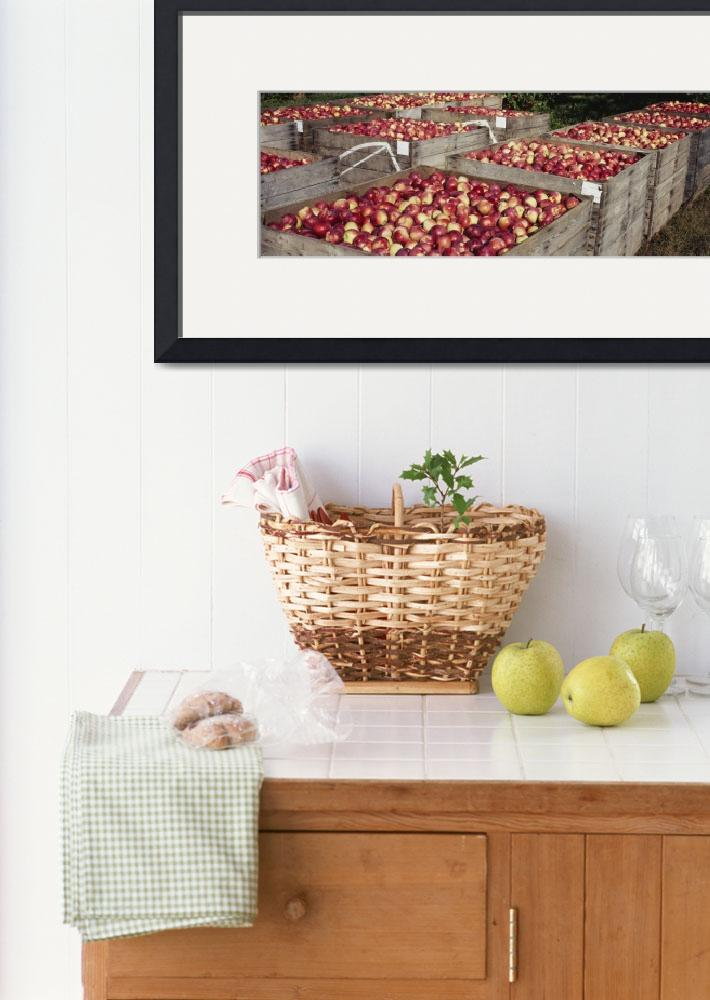 """""""Heap of apples in wooden crates&quot  by Panoramic_Images"""