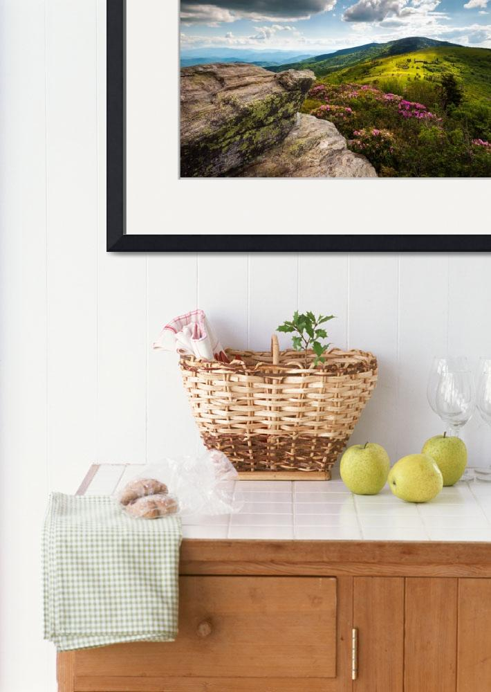 """Roan Mountain Rhododendron Bloom&quot  (2012) by DAPhoto"
