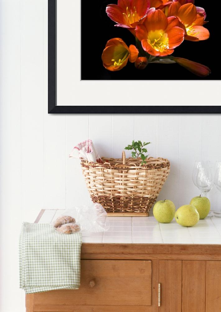 """Floral Still Life (Freesia)&quot  (2012) by davidbricher"