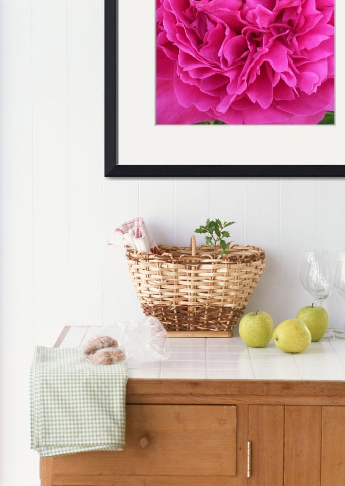 """""""Rose Peony&quot  by Naturesgrace"""